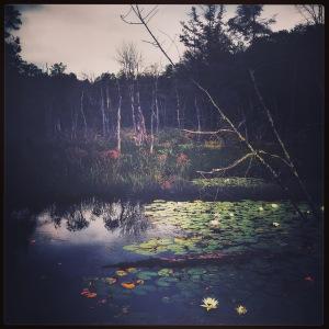Meshomasic Glastonbury 3